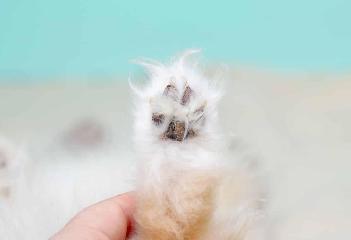 Calli sui cuscinetti del cane (Foto Adobe Stock)
