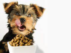 L'importanza dello spuntino per il cane (Foto Adobe Stock)