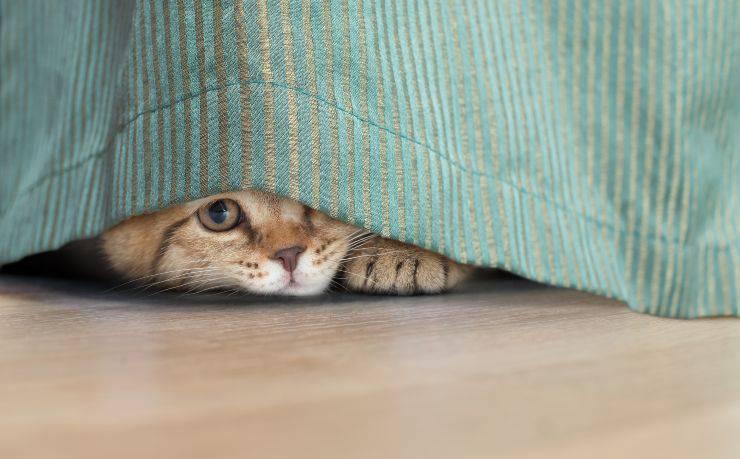 Dove si nasconde il gatto
