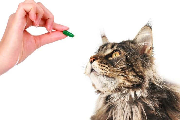 Come dare la pillola al gatto (Foto Adobe Stock)