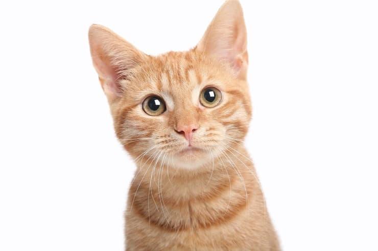 Il gatto può mangiare le more? (Foto Adobe Stock)