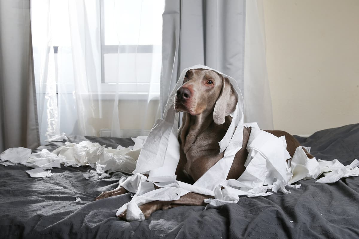 5 cattive abitudini del cane (Foto Adobe Stock)