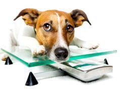 Come riconoscere le carenze nutrizionali nel cane (Foto Adobe Stock)