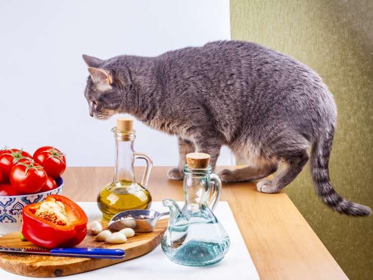 Olio di oliva al gatto