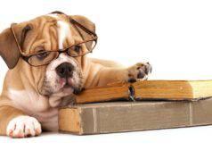 5 buone abitudini da insegnare al cane (Foto Adobe Stock)