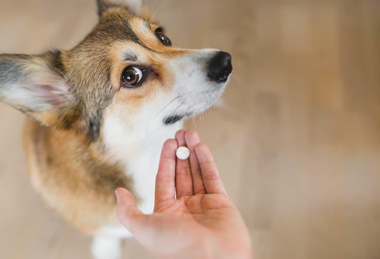 Come dare la pillola al cane (Foto Adobe Stock)