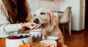 Il cane può mangiare i mirtilli? (Foto Adobe Stock)