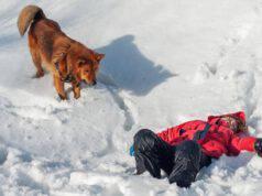 Cane da salvataggio in montagna