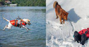 Cani da salvataggio in mare e in montagna