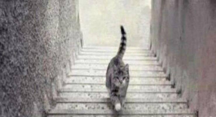 test della personalità: il gatto scende o sale le scale
