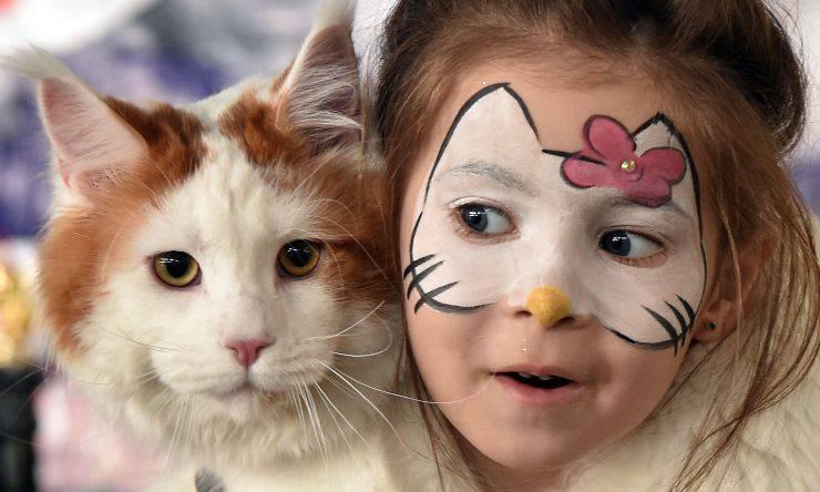 gatto preservativi