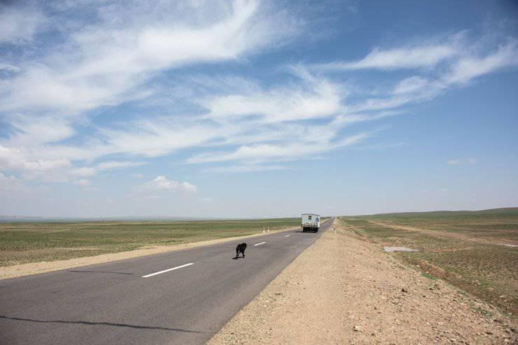 cucciolo autostrada