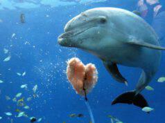 delfini progetto bali delfini in mare