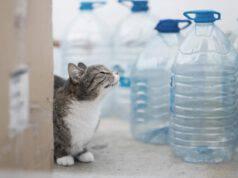 Perché i gatti hanno paura delle bottiglie d acqua
