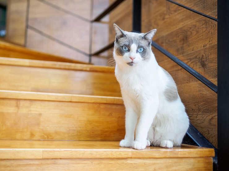 Gatto sulle scale (Foto Adobe Stock)