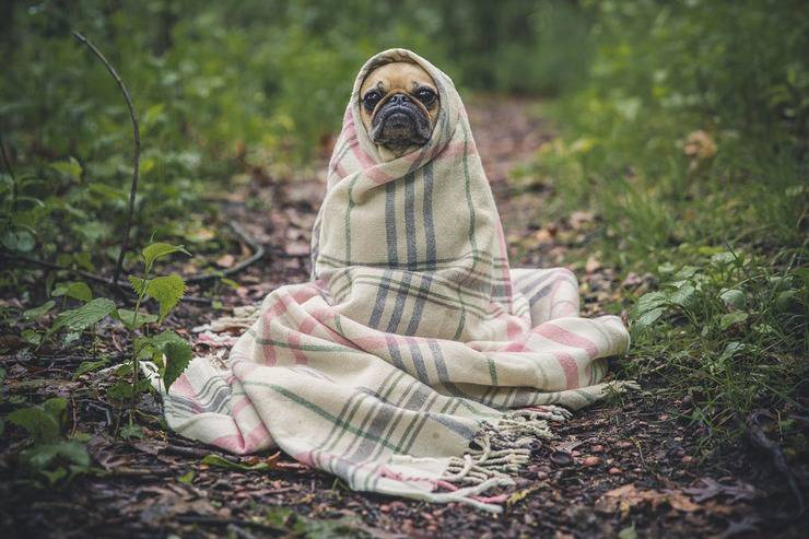 Lasciare il cucciolo da solo è il primo passo (Foto Pixabay)