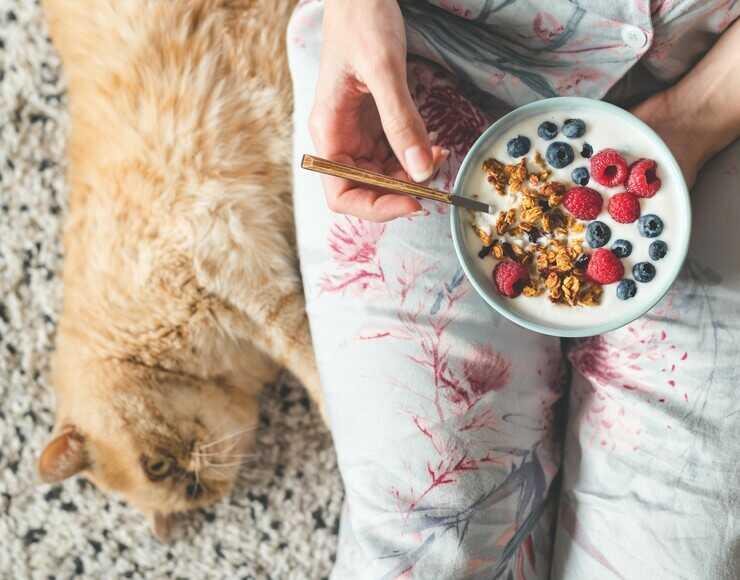 Il gatto può mangiare il lampone? (Foto Adobe Stock)