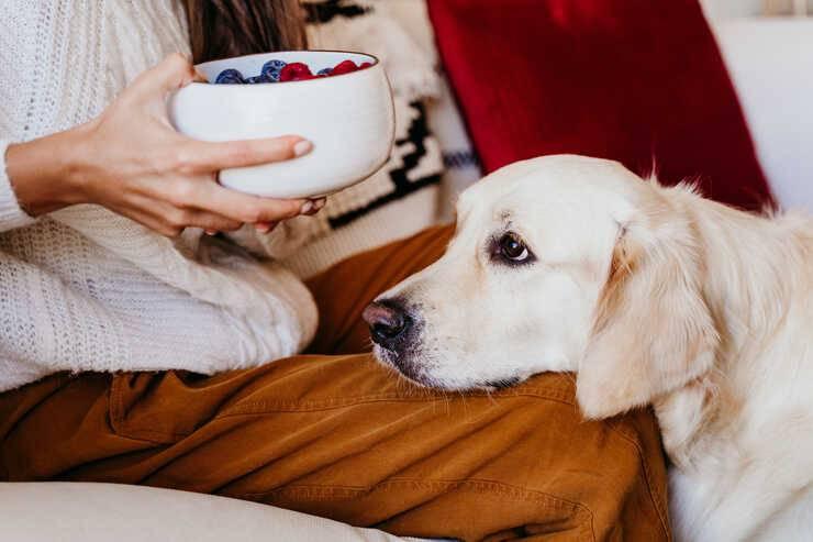 Il cane può mangiare il lampone? (Foto Pixabay)