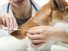 Cosa rischia chi non mette il microchip al cane? (Foto Adobe Stock)