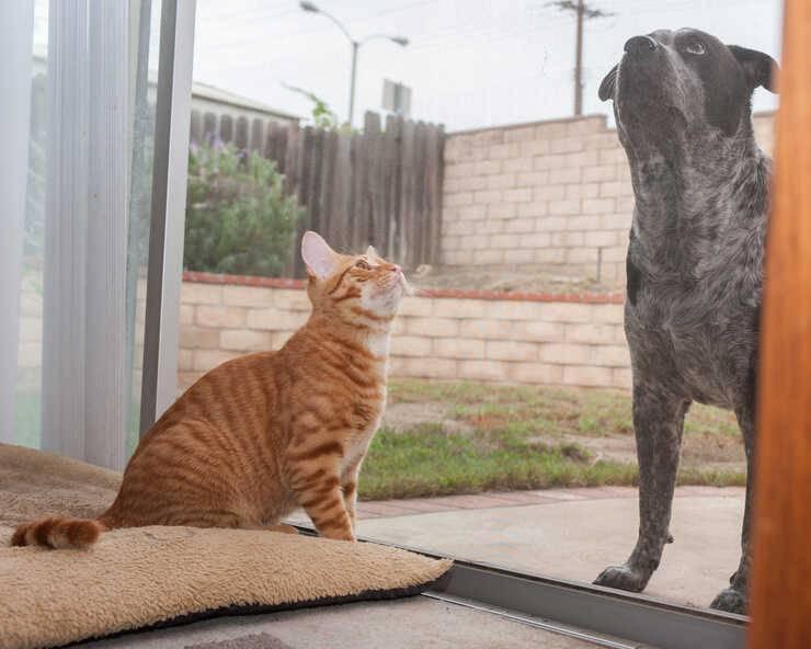 se cane e gatto non vanno d'accordo (Foto Pixabay)