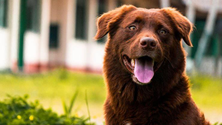 Come allontanare le mosche dal nostro cane in estate: tutti i consigli