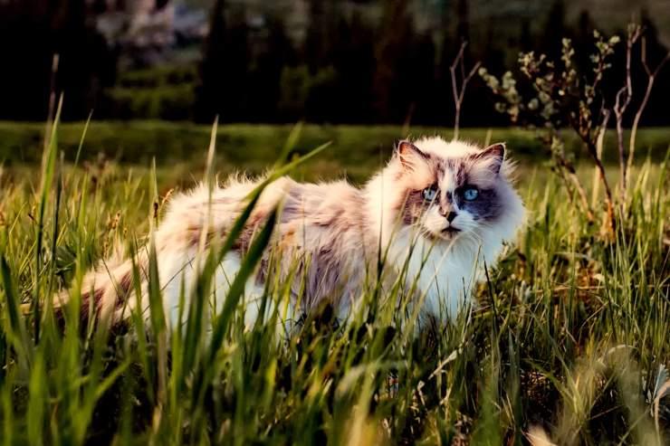 Aiutare il gatto a superare l'estate e sopportare il caldo
