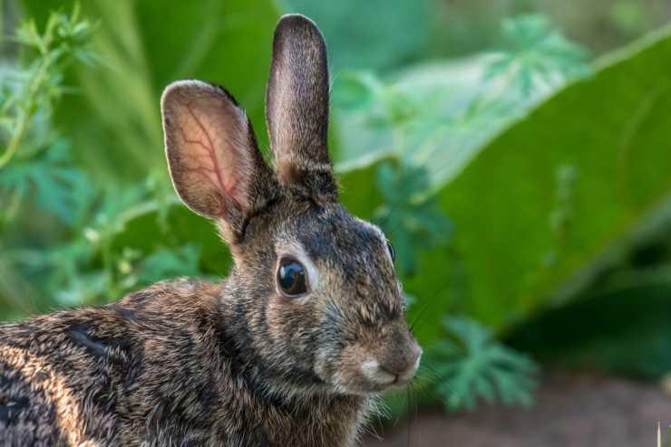 Coniglio nell'erba (Foto Pixabay)