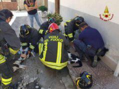 animali intossicati incendio