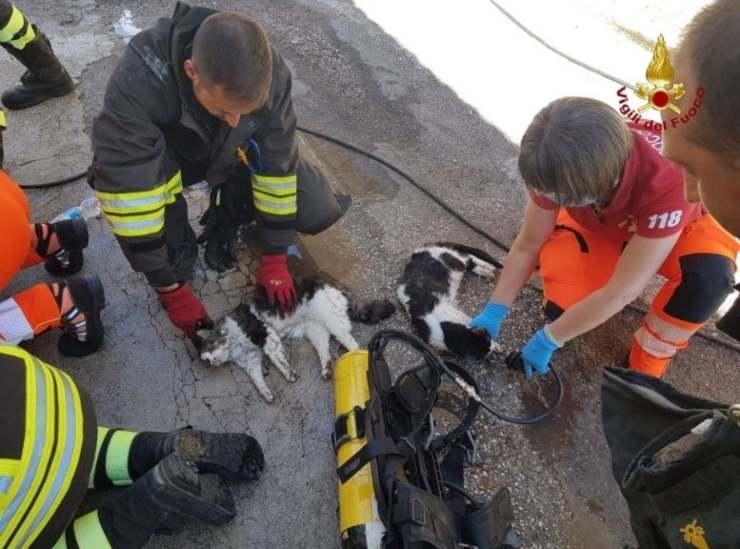 vigili salvano animali