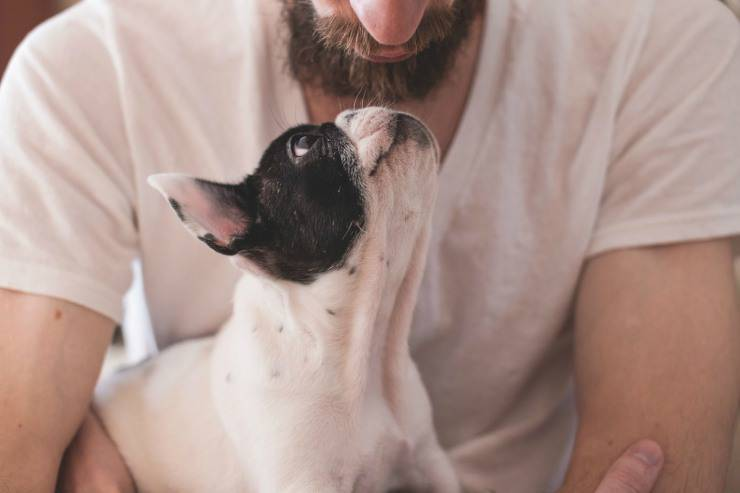 Dimostrare di essere proprietari di un cane