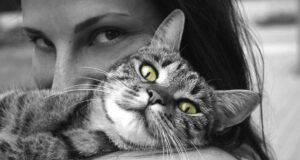 I gatti sentono la mancanza del padrone