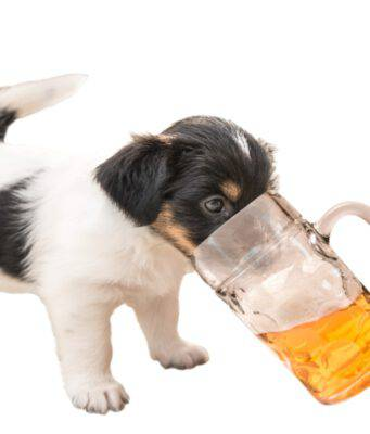cane e birra