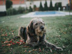 Addestrare un cane anziano