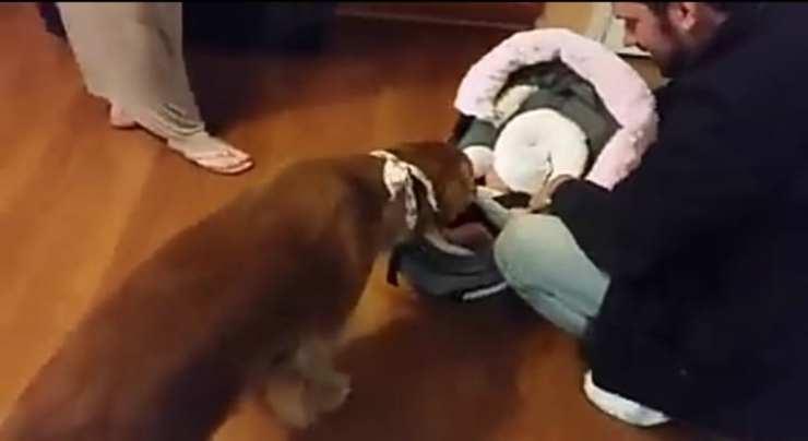 il cane vicino la neonata (Foto video)