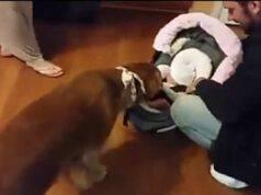 Il cane e la bambina (Foto video)