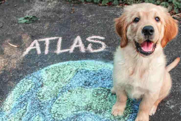 La felicità di Atlas (Foto Instagram)