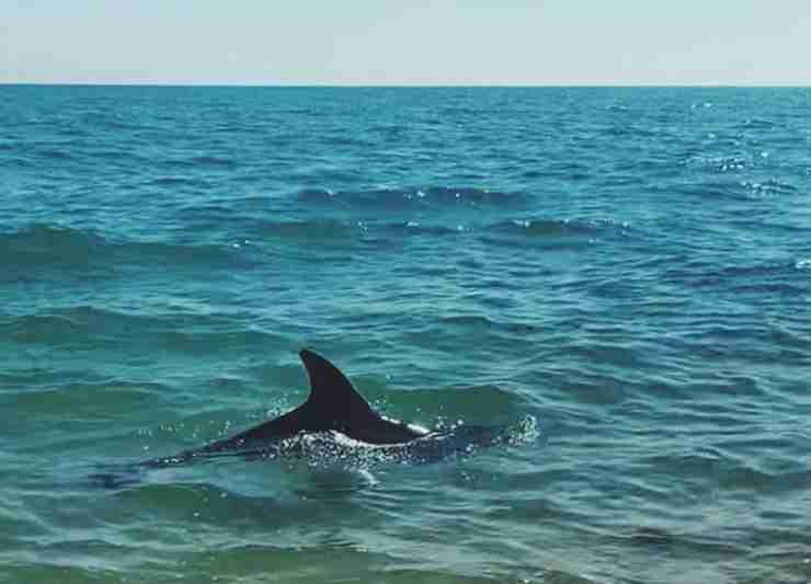 Il delfino in acqua (Foto Instagram)