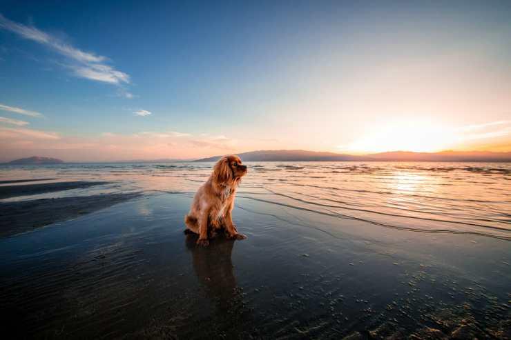Il cane che guarda il mare (Foto Pixabay)