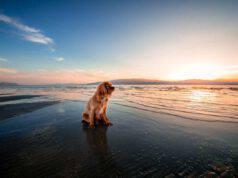 Il cane all'alba (Foto pixabay)