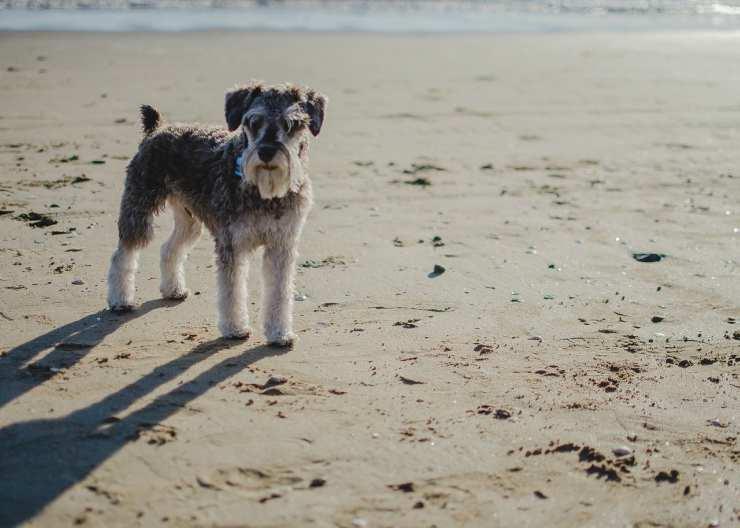 Il cane sulla sabbia (Foto pixabay)