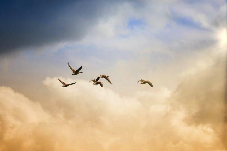 Volatili nel cielo (Foto Pixabay)