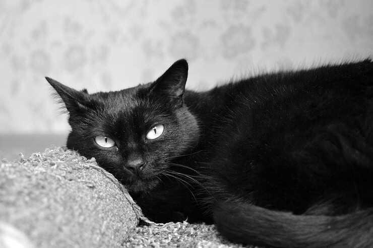 Avvelenamento da prugne nel gatto (Foto Pixabay)