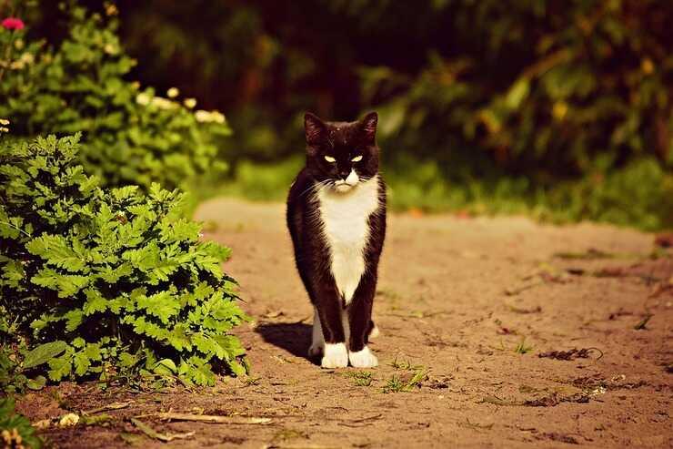 Gatto randagio (Foto Pixabay)