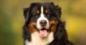 Cani meno longevi
