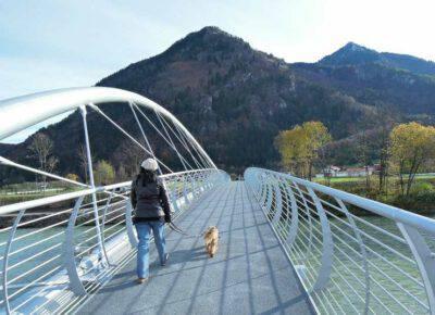 Cane sul ponte