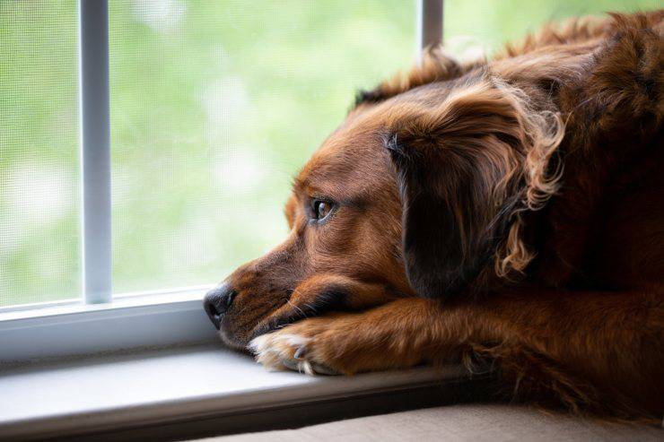 Cane solo a casa aspetta padrone