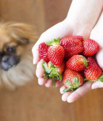 Ricette estive per il cane