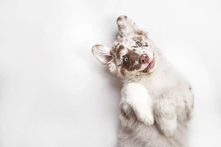 insegnare al cucciolo a non mordere