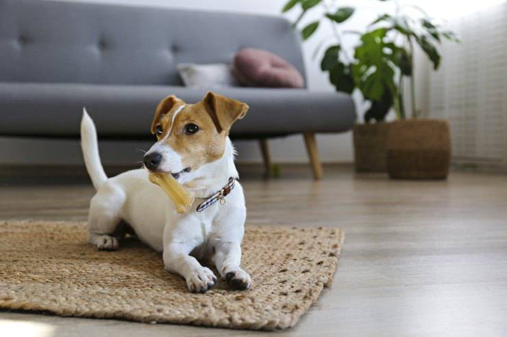 cucciolo ha la coda alzata