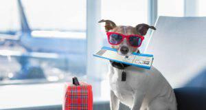 Portare il cane in aereo
